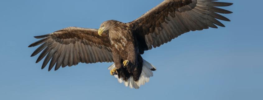 Neue Technologien für den Vogelschutzsystem an Windkraftanlagen