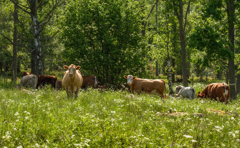 klimatbalans på gårdsnivå